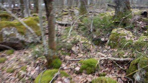 Daily Walk through ancient glacial moraine 2 Footage