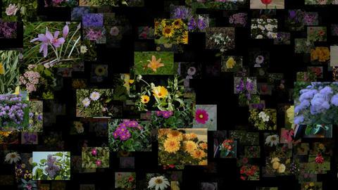 Photo stream of flowers, seamless loop Animation