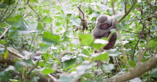 Best Of Taiwan - Monkeys 2