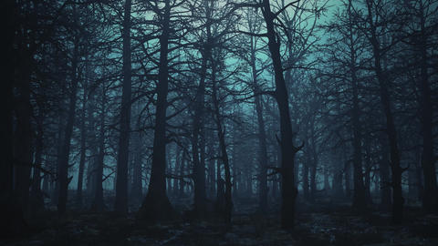 Looped animation of flying through a scary forest Animation