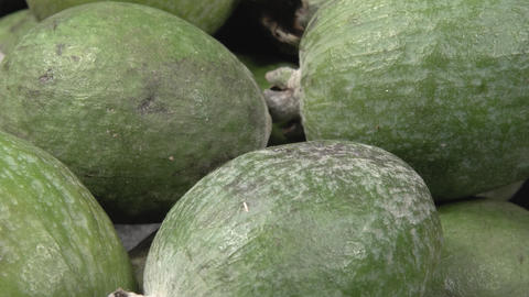 Feijoa close-up. Many organic fruit.Feijoa close-up. Organic fruit. Ripe healthy Live Action