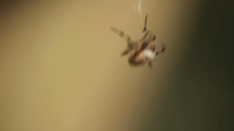 Curious spider Stock Video Footage