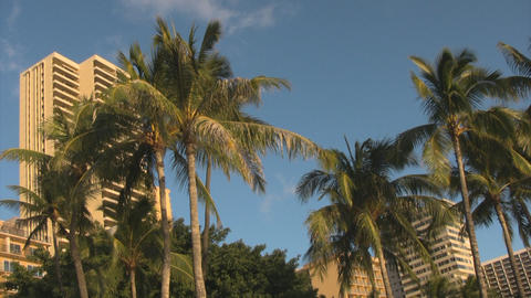 Palm trees and sky04 Stock Video Footage