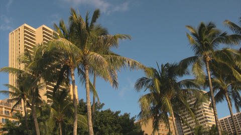 Palm trees and sky04 Footage