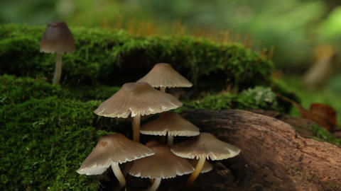 fungus on a tree Stock Video Footage