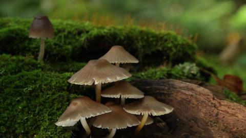 fungus on a tree Stock Video Footage