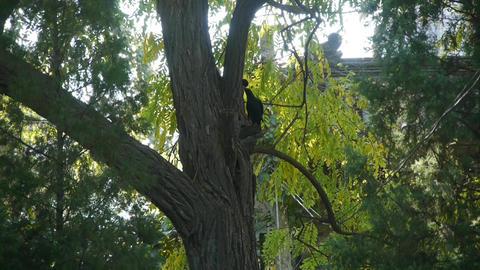 Bird in woods tree trunk Stock Video Footage