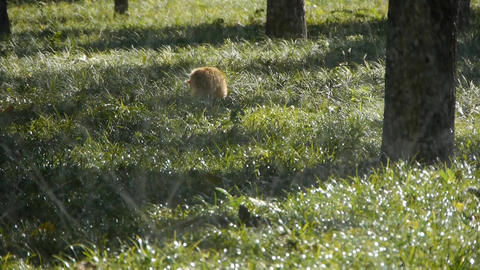 Cat & Grass water spray in woods forest,sunshine on... Stock Video Footage
