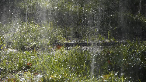 Grass water spray in woods,sunshine rain on lawn... Stock Video Footage