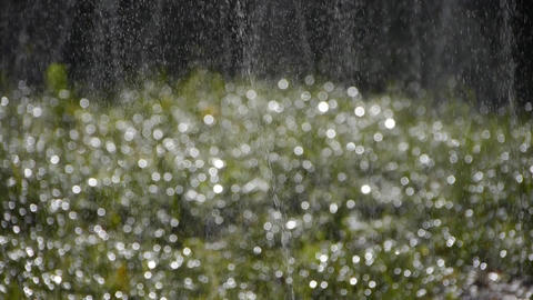 Grass water spray in woods,sunshine rain on lawn backdrop,droplets background Footage