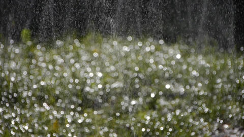 Grass water spray in woods,sunshine rain on lawn... Stock Video Footage