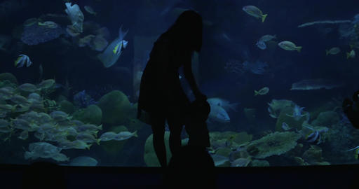 In Bangkok, Thailand at the oceanarium of Siam Ocean World man photographs a you Footage