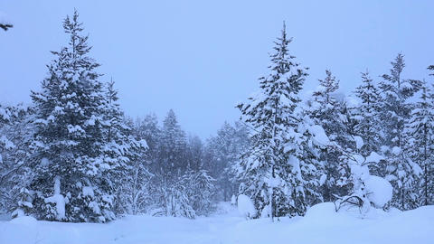 Thick Snowfall in the Forest. Looped Footage