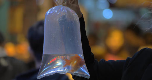 Woman holding plastic bag with goldfish in the street Live Action