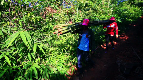 People Carry Bamboo Stems along Shady Path in Jungle Footage
