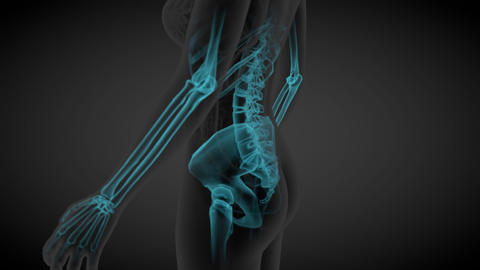 2 loop videos in 1, female body - x-ray scan of skeleton and organs Animation