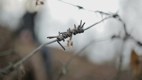 Sharp barbed wire close-up, silhouette of annoyed person throwing papers in wind Footage
