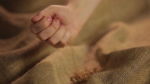 Human hand carefully pouring handful of selected wheat grain on brown sackcloth ビデオ