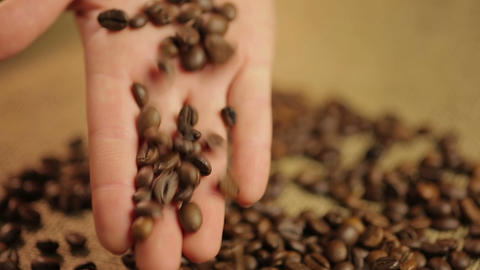 Expert's hand checking light roasted coffee beans, quality control at plantation Footage