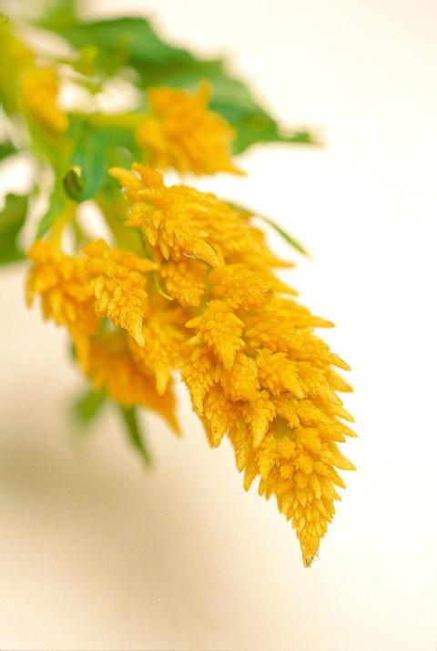 Decorative flowers 相片