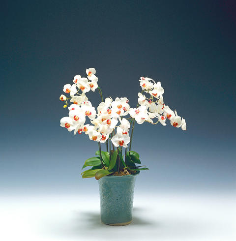 Studio shot of potted flowers Photo