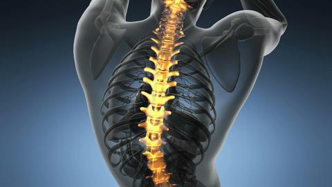 backbone. backache. science anatomy scan of human spine bones glowing Footage