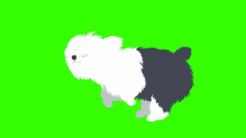 Cartoon Sheep Dog Running: Loop + Matte Animation