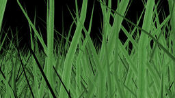 The camera is moving in the tall grass Animation