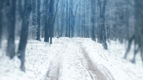 Beautiful winter landscape with woods Footage