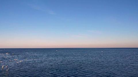 4K Seagulls flying over the Black Sea, Turkey Footage