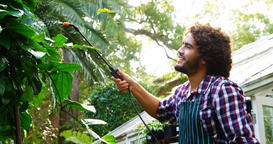 Man watering plant with garden sprayer Live Action