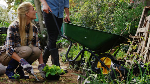 Man walking with wheelbarrow and female gardener digging soil with garden fork Live Action