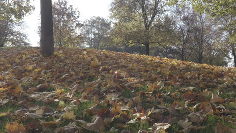 Autumn leaves on the hill in sunny day Footage