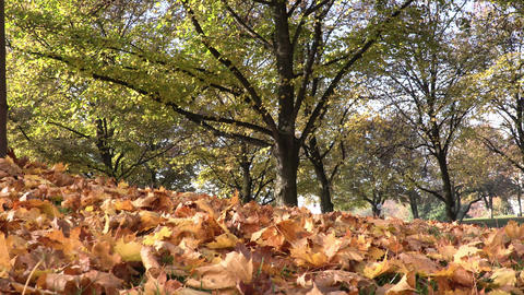 Autumn leaves on ground sunny day Footage