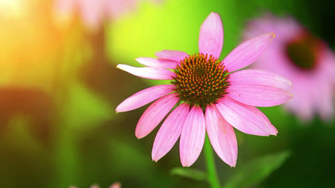 Wild Flowers In The Meadow Stock Video Footage
