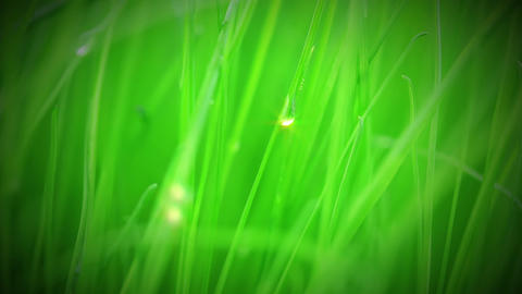 Fresh grass after rain Stock Video Footage