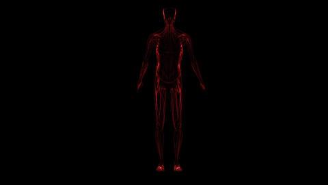 Haman Anatomy (variant Of Colors 2)