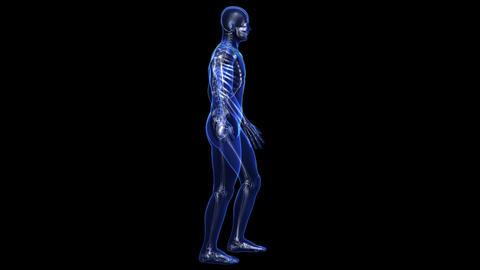 Anatomy: skin and skeleton Stock Video Footage