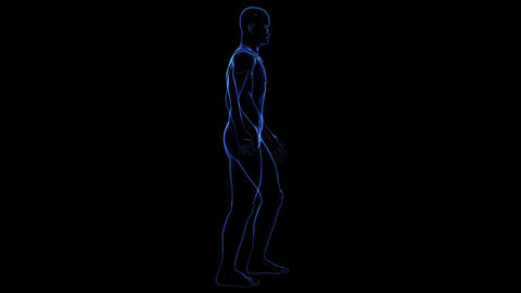 Anatomy of the human body: skin Animation