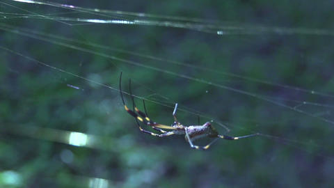 Spider 02 Stock Video Footage