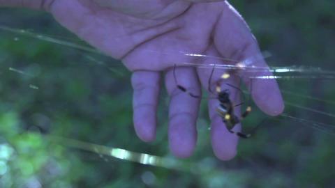 Spider 02 Footage