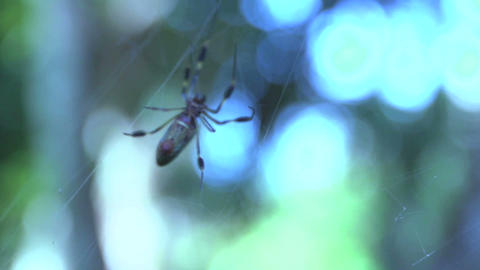 Spider 04 Stock Video Footage