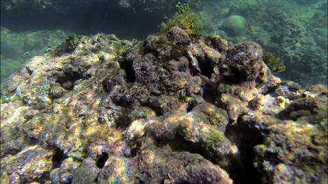 Underwaterworld Puerto Viejo 01 stock footage