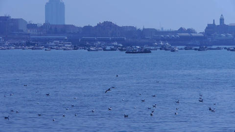 Many seagull flying in sea,reef,Seaside dams of QingDao city,Yachts ship & V Footage