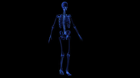 Anatomy: skeleton Stock Video Footage