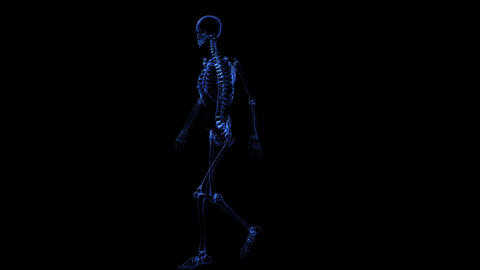 Anatomy: Skeleton stock footage
