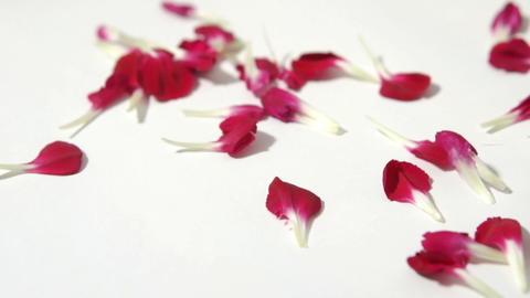Red Petals stock footage