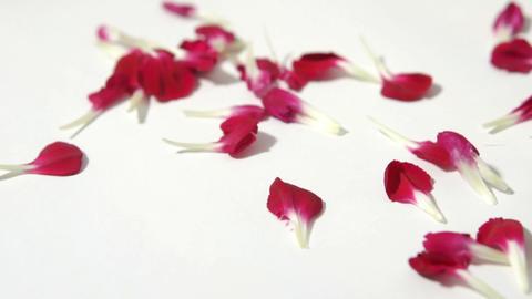 Red Petals Footage