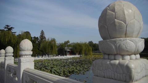 Vast lotus leaf pool in autumn beijing & white bridge Stock Video Footage