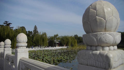 Vast lotus leaf pool in autumn beijing & white bridge Stock Video Footage